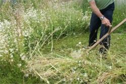 Скот съел 9 тыс. т. зеленых кормов