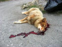 Отлов бродячих собак признан незаконным