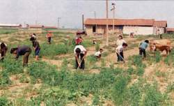 Приставы депортировали 11 узбеков