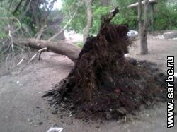 Глаз народа. Дерево повредило теплотрассу