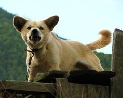 Зафиксированы 22 случая бешенства животных