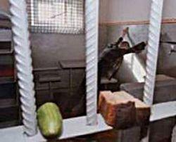В ИК-2 умер заключенный