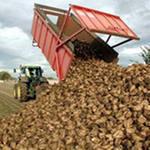 Сахарный комбинат намерен переработать 320 тыс. т. сырья