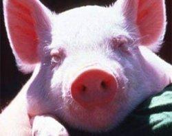 """Ветеринары """"выдворили"""" из региона 2,8 т. непроверенной свинины"""