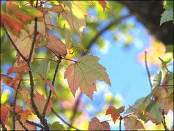 Курской области прогнозируют теплый сентябрь