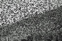 Орнитологи предлагают переписать птиц