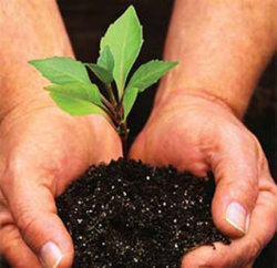 На озеленение потратят 193 млн. рублей