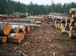 Ущерб от низовых лесных пожаров составил 137 млн рублей