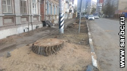 В центре города спилены 11 деревьев