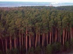 Загрязнение земель отходами спиртзавода оценено в 12,3 млн
