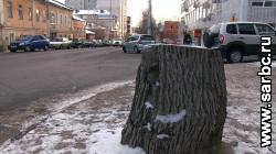 В центре Саратова опять вырубают деревья