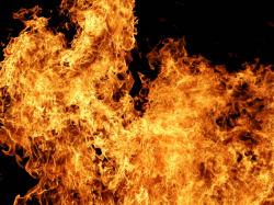 В аэропорту сожгли 449 кг продуктов