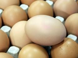 Зафиксировано заражение цыплят псевдомонозом