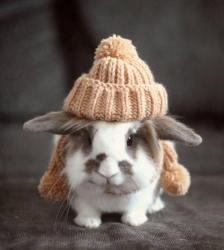 Выявлена особо опасная болезнь кроликов