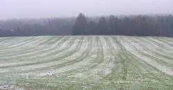 59% озимых посевов в области - в удовлетворительном и плохом состоянии