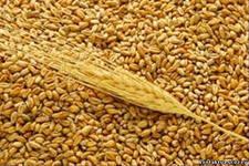 Будут увеличены посевы зернобобовых и кормовых культур