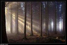 В лесах проложено 6,5 тыс. км маршрутов для патрулирования