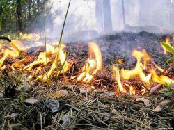 В правительстве обсудят готовность к пожароопасному сезону