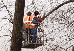 Общественники предлагают озеленять овраги и заменить обрезку деревьев стрижкой