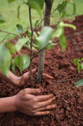 На Первомайской высадили 12 деревьев