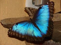 Состоится выставка живых тропических бабочек