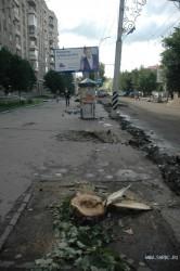 В мэрии прокомментировали спил деревьев на Московской