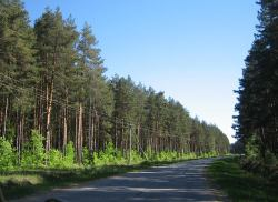 """Лесхозы и райадминистрации чистят """"ничьи"""" придорожные лесопосадки"""
