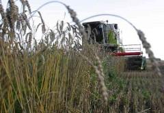 Средняя урожайность зерновых в области - 18,2 ц/га, в России - 29,9