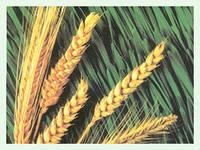 Региону выделено 414 млн на поддержку растениеводов