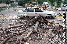Падение дерева на Новоузенской. Директор предприятия вспомнил экологов