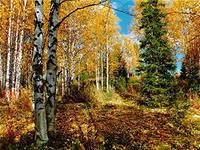 Прокуратура: лесоустройством в области не занимались более 15 лет