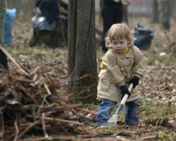 Горожан приглашают на уборку леса