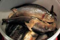 У нарушителей изъято более 18 тонн рыбы и рыбопродуктов
