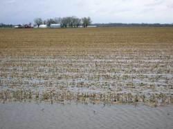 Из-за дождей потеряна часть урожая