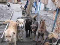 Чиновники проконтролировали работу по отлову бездомных животных