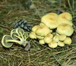 """Санврач посоветовала не разбирающимся в грибах ходить в лес """"просто пошуршать листьями"""""""