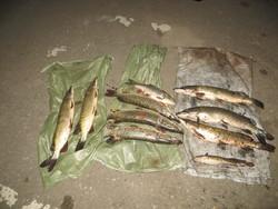 На дороге задержали браконьеров с рыбой и острогой