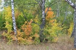 Минприроды: в области 2 тысячи га могут сделать лесным фондом