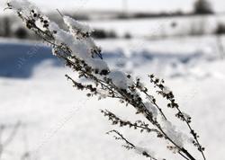 В области ожидаются морозы до 33 градусов