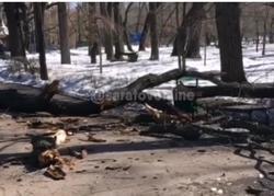 В горпарке на семью с ребенком упало дерево