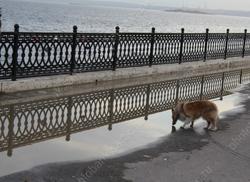 Собак запретили выгуливать на детских и спортплощадках