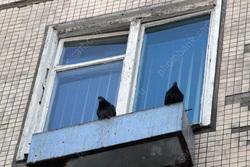 Ребенок играл на краю окна при спящих матери и бабушке