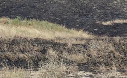 За сутки зарегистрировано 35 возгораний травы