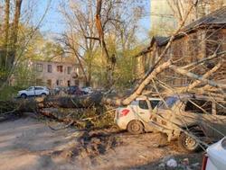 Упавшее дерево повредило 3 машины и газовую трубу