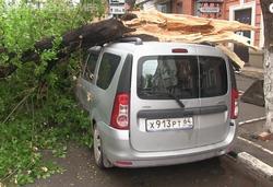 В центре города рухнувшее дерево придавило четыре машины