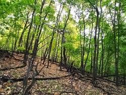 Жителям области запретили находиться в лесах