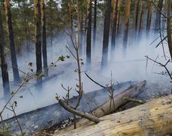 Губернатор поручил контролировать тушение пожара в нацпарке Хвалынский