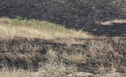 В области произошло 25 лесных пожаров