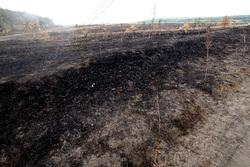 В области за сутки произошло 3 ландшафтных пожара на 10 га