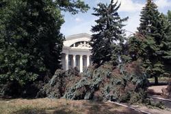 Общественник предложил провести народную инвентаризацию деревьев